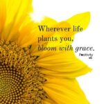 Most Popular Famous Poems About Sunflowers Photo757