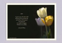Most Popular Famous Poems About Tulips Photo372