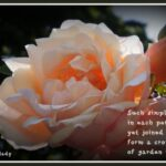 Most Popular Flowers Are Beautiful Poem Pic102