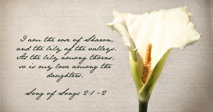 Most Popular Lily Of The Valley Poem Picture325