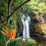 Most Popular Paradise Lost Flower Pic644