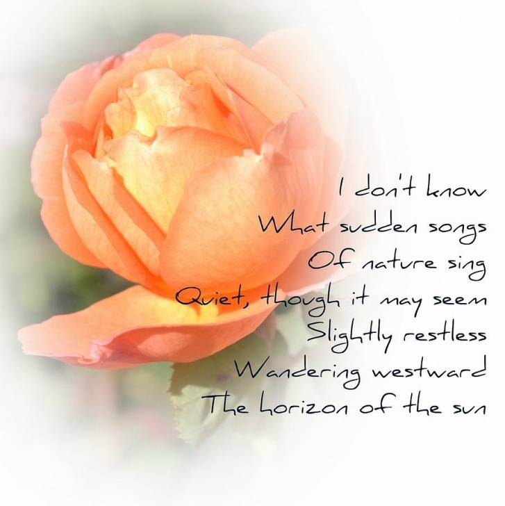 Most Popular Rose Flower Poem In English Pic740