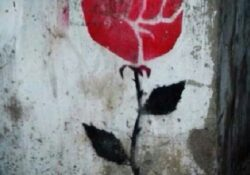 Most Popular Rose Grows From Concrete Pics685