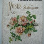 Most Popular Rose Poem Shakespeare Picture365