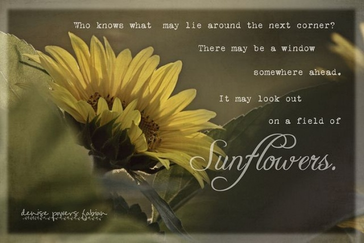 Most Popular Sunflower Poem In English Image598