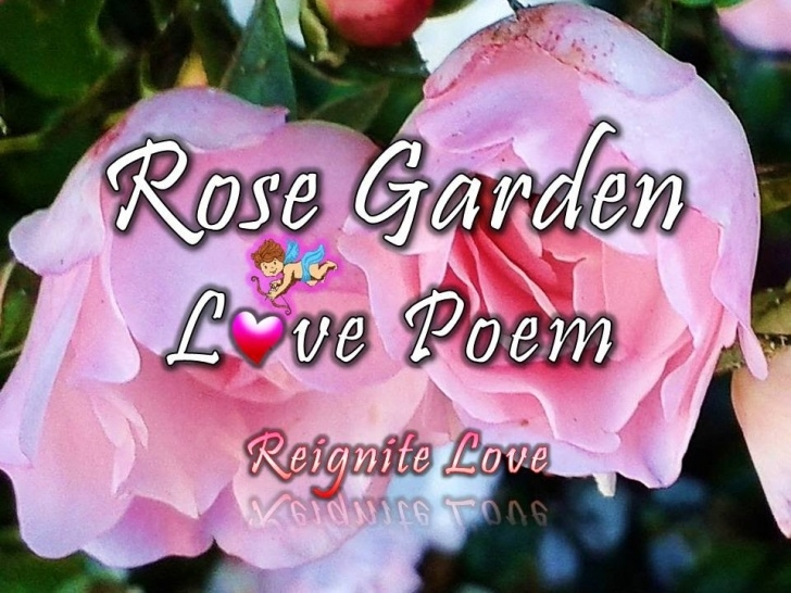 Motivational A Rose Poem For Her Pic309