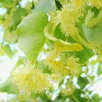 Motivational Linden Tree Poem Photo234