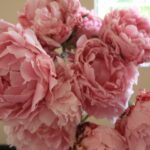 Motivational Mary Oliver Peonies Photo586