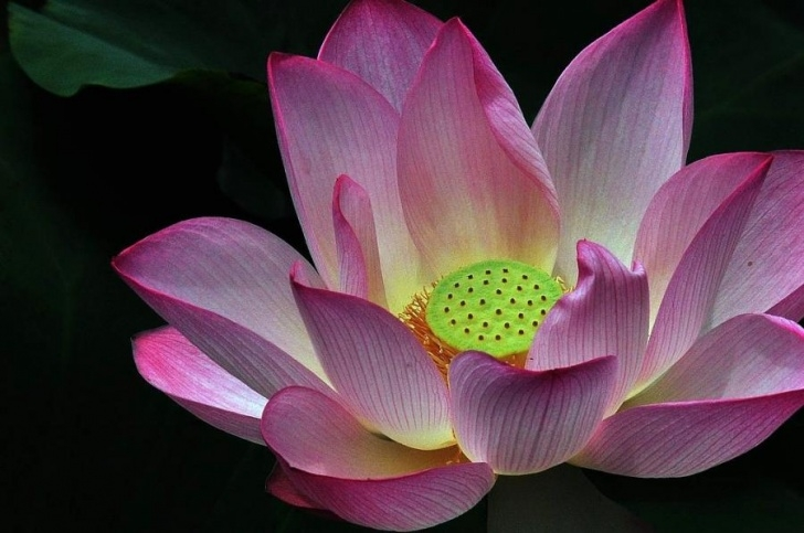 Motivational Poem On Lotus Flower In English Image771