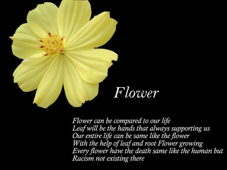 Motivational Poem The Most Beautiful Flower Pics326