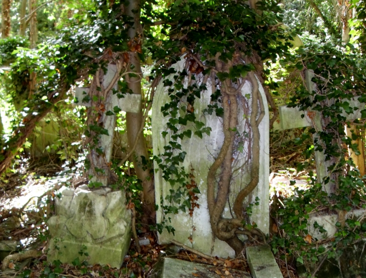 Motivational Poems About Ivy Plants Pic804