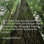 Motivational Poems About Trees And Strength Photo921