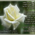 Motivational Rose Garden Poem Image699