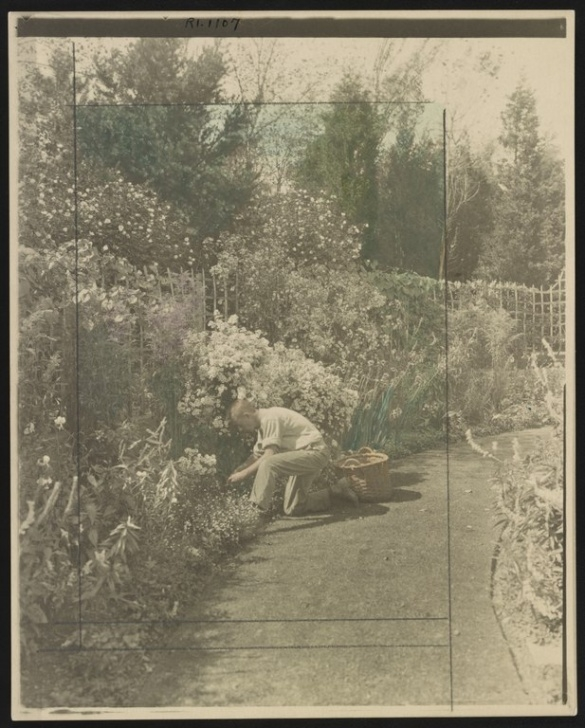 Motivational The Glory Of The Garden Kipling Pic603