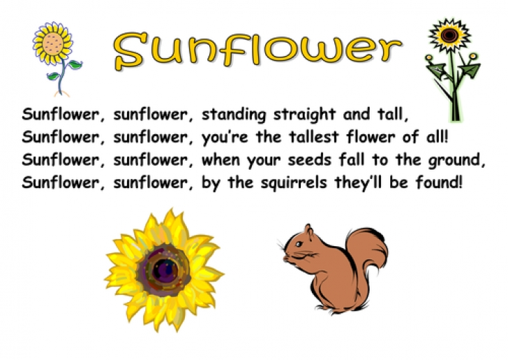 Motivational The Sunflower Poem Photo421