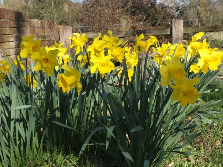 Motivational To The Daffodils Pic846