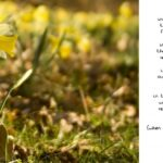 Motivational To The Daffodils Poem Image364