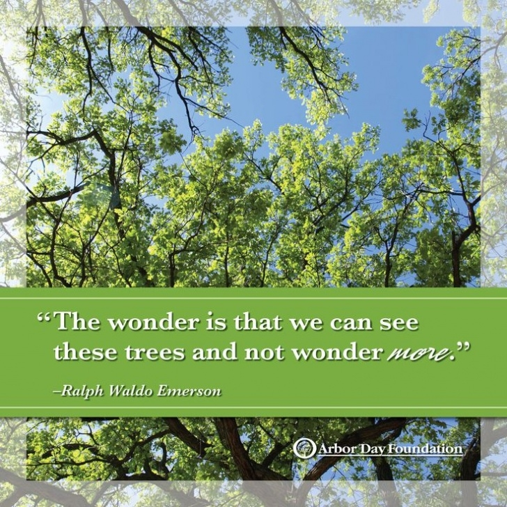 Outstanding Arbor Day Poems Photo986