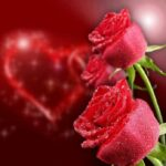 Outstanding Beautiful Rose Poems Picture853