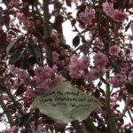 Outstanding Blossom Tree Poem Photo498