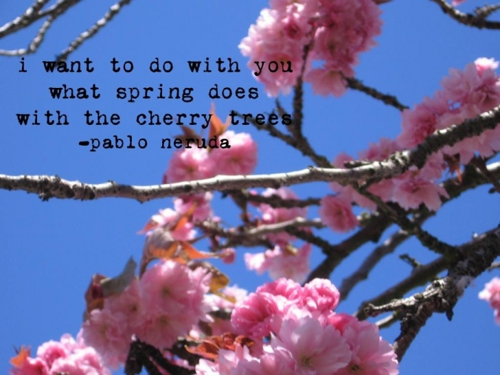 Outstanding Blossom Tree Poem Pic946