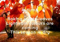 Outstanding Haiku About Flowers 5 7 5 Pic534