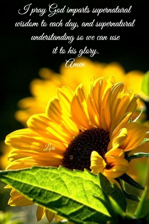 Outstanding If Sunflowers Grow In Heaven Poem Pics476