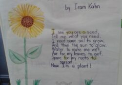 Outstanding Life Of A Plant Poem Pics192