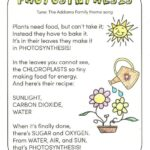 Outstanding Life Of A Plant Poem Picture322
