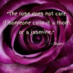 Outstanding Life Of A Rose Poem Pic090