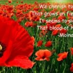 Outstanding Poppies In July Poem Picture976
