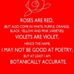 Outstanding Romantic Roses Are Red Poems Photo041