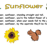 Outstanding Sun And Her Flowers Poems Pic675