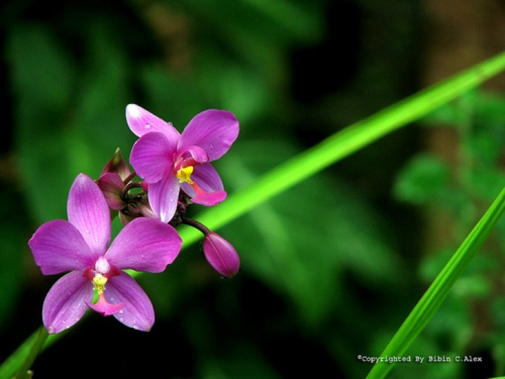 Outstanding The Yellow Violet By William Cullen Bryant Pics176