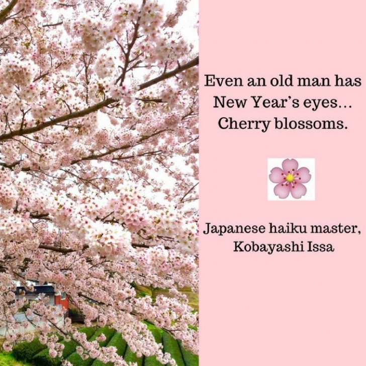 Outstanding To Blossoms Poem Pics023