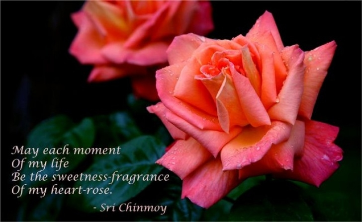 Poem To Give With Tree To Plant For Deceased Loved One with regard to Short Poems | Sri Chinmoy'S Poetry Picture303
