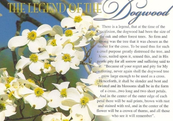 Popular Dogwood Tree Poem Pic679
