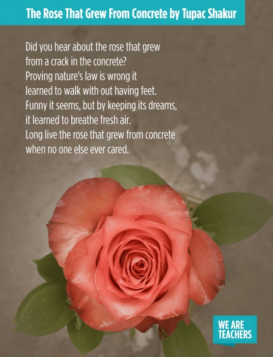 Popular Life Of A Rose Poem Picture085