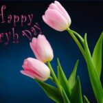 Popular Poem On Tulip Flower Pics902