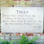 Popular Poems About Trees Picture143