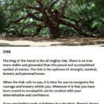 Popular The Mighty Oak Tree Poem Image633