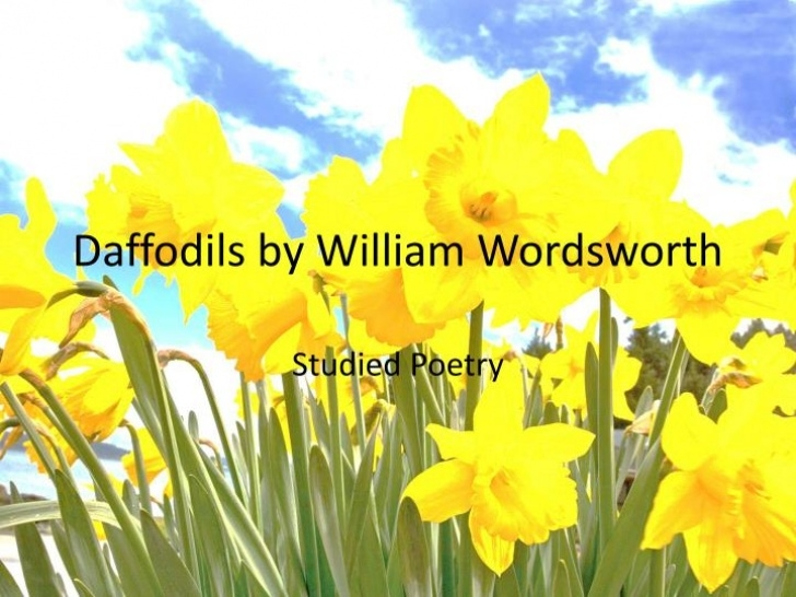 Popular The Poem Of Daffodils Photo124