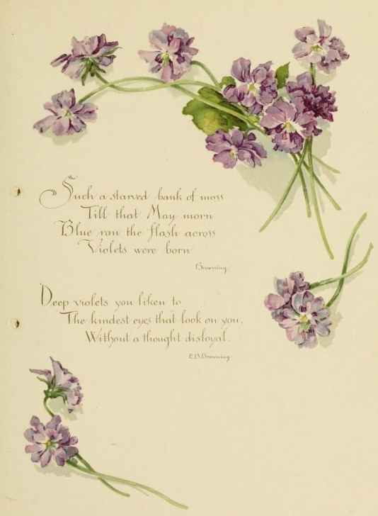 Popular Violets Are Purple Poem Photo601