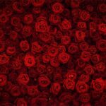 Stunning Cute Roses Are Red Violets Are Blue Poems Pic096