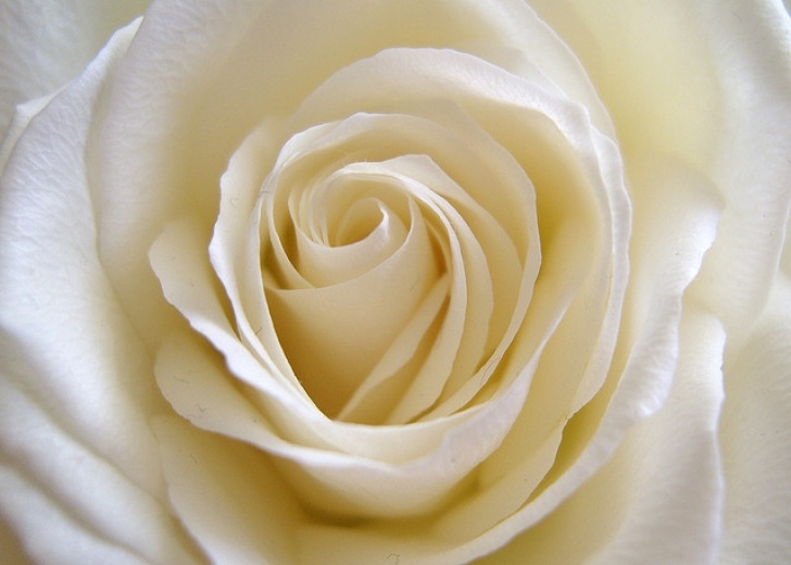 Stunning Life Of A Rose Poem Picture258
