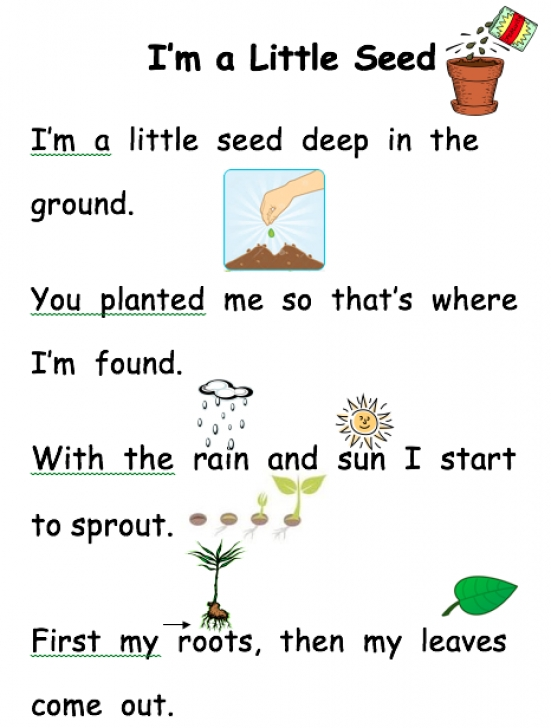 Stunning Little Flower Poem Pic968