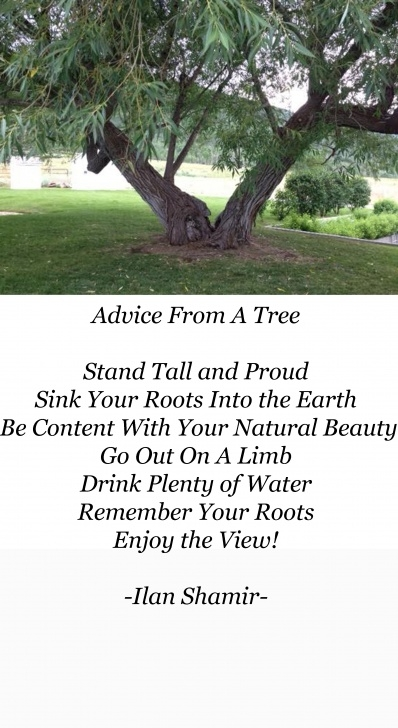 Stunning Poems About Trees Pic265