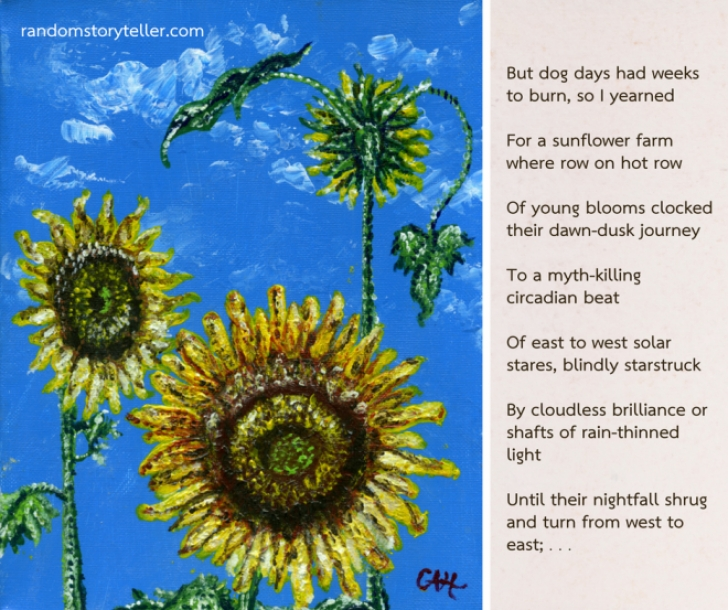 Stunning Summer Flowers Poem Picture466