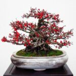 Stunning The Bonsai Tree Poem Pics058
