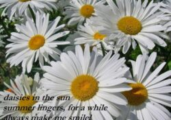 Stunning The Daisy Poem Picture425